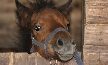 Promenade à poney d1h pour 1 ou 2 enfants dès 11,90 € au centre équestre Les Roseaux de Goulaine