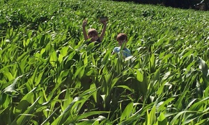 Stanhill Farm: Maize Maze Entry For Three or Five at Stanhill Farm (Up to 40% Off)