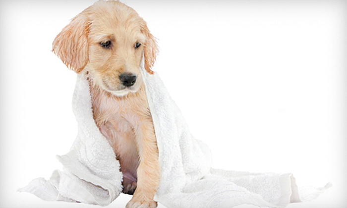 Lola's Healthy Pet Cafe - Wilton Manors: Bath Service for a Small-to-Medium, Large, or Extralarge Dog at Lola's Healthy Pet Cafe in Wilton Manors (Up to 62% Off)