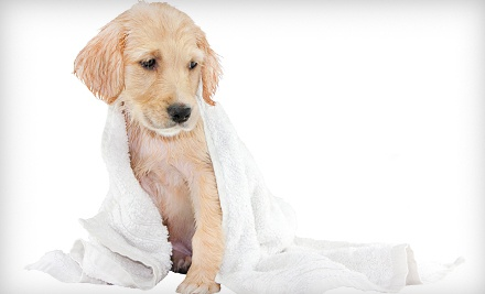 Bath Service for a Dog Up to 50 Pounds (a $45 value) - Lola's Healthy Pet Cafe in Wilton Manors