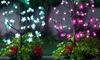 LED Cherry Blossom Bush
