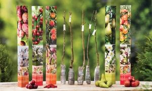 5 et 10 arbres fruitiers 90cm