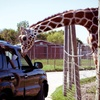 Up to 68% Off at African Safari Wildlife Park