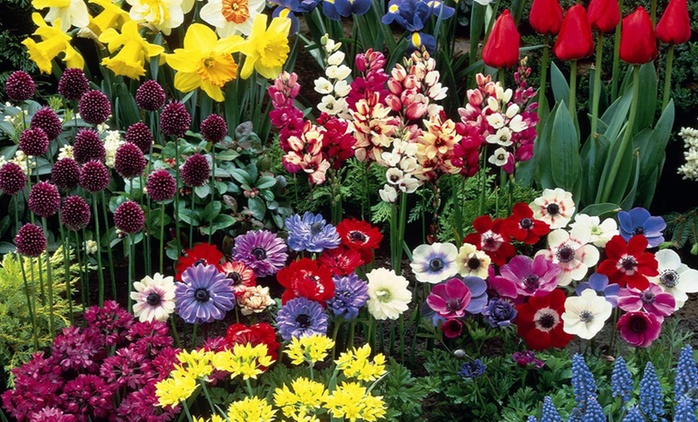 Crazy Colour Summer Flowering Bulb Collection from £5 With Free Delivery (Up to 67% Off)
