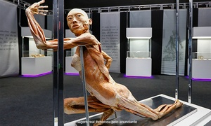 Art BHZ: Human Bodies – Maravilhas do Corpo Humano - Shopping Catuaí Palladium: 1 ou 2 ingressos