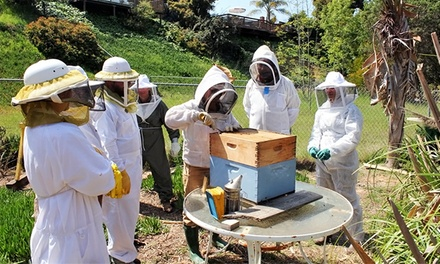 Walk Through a Honeybee Hive with a Local Beekeeping Expert