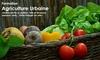 Formation en ligne en agriculture urbaine