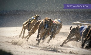 Henlow Racing: Greyhound Racing Night with Meal, Drink and Racecard for Up to Six at Henlow Greyhound Stadium (Up to 68% Off)