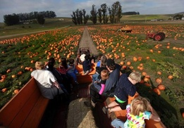 Up to 45% Off Pumpkins at The Great Peter Pumpkin Patch at The Great Peter Pumpkin Patch, plus 6.0% Cash Back from Ebates.