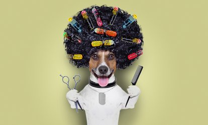 image for Dog Grooming Session for Small, Medium or Large Dog at Best in Show (Up to 33% Off)