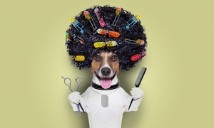 Best in Show: Dog Grooming Session for Small, Medium or Large Dog at Best in Show (Up to 33% Off)