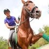 3 lezioni di equitazione e patente A club