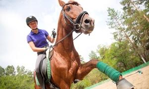 Circolo ippico Il Paguro Saltarellante: Passeggiata a cavallo con 2 lezioni per 2 o 4 persone al Circolo ippico Il Paguro Saltarellante (sconto fino a 80%)