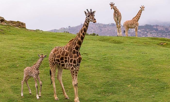 San diego zoo deals groupon