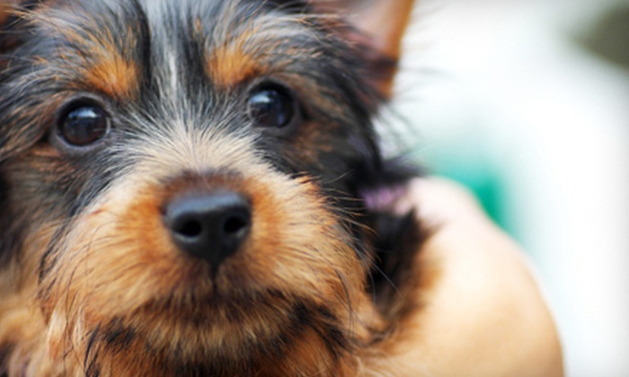 The Pet's Play Palace - University Place: $10 Toward Grooming and Pet-Boarding Services