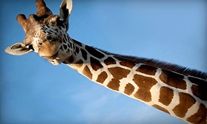 African Safari Wildlife Park - Port Clinton: African Safari Wildlife Park Visit on Weekday or Any Day in Port Clinton (Up to 64% Off)