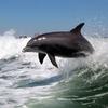 35% Off Dolphin-Watching Speedboat Trip