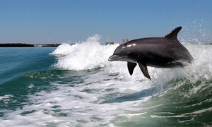 44% Off Dolphin-Watching Speedboat Trip  at Dolphin Racer Speed Boat, plus 6.0% Cash Back from Ebates.