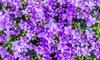 16 plantes vivaces rampantes