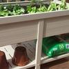 EcoFlex Garden Planters