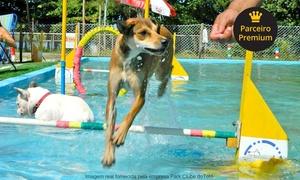 Park Clube doTotó: Day use para 1 ou 2 cães no Park Clube do Totó – Barra da Tijuca