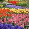 Spring Bloom Flower Garden Collection (25-Pack)
