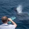 Up to 67% Off Whale Watching & Museum Ticket at Newport Legacy