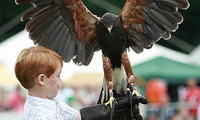 Bird of Prey and Exotic Animal Encounter with Cream Tea for One or Two at Fur and Feather (Up to 74% Off)