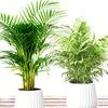 4-teiliges Zimmerpflanzen-Set