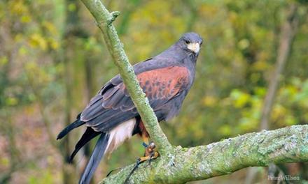 Hammerwood Falconry