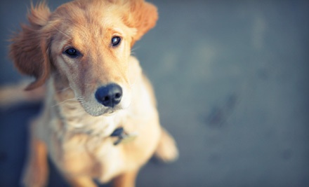 $20 Groupon to Pets: The Whole 9 Yards - Pets: The Whole 9 Yards in Irmo