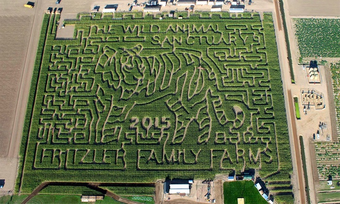 The Fritzler Maize - La Salle: Haunted Corn Maze Admission or Family Combo at The Fritzler Maize (Up to 44% Off). Five Options Available.
