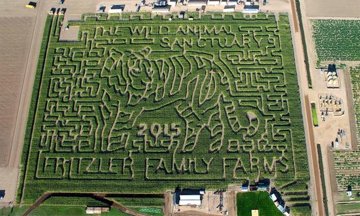 The Fritzler Maize