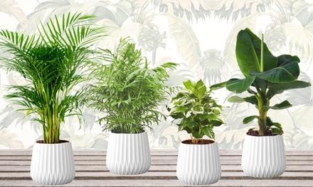 Set di 4 piante da appartamento facili da curare