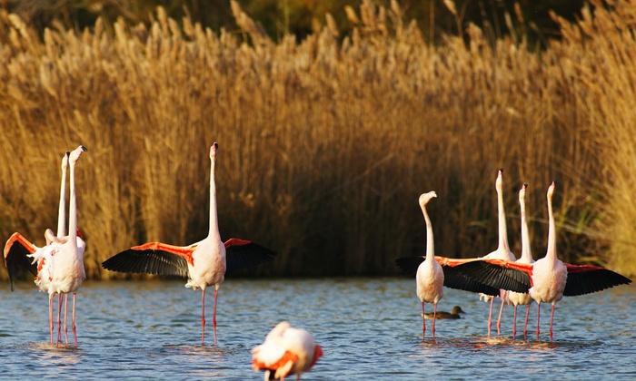 1 ou 2 entrées pour adultes et/ou enfants dès 5,90 € au parc ornithologique de Pont de Gau