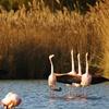 Entrées au parc ornithologique de Pont de Gau