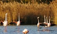 Entrées pour adultes etou enfants dès 5,90 € au parc ornithologique de Pont de Gau