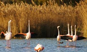 Entrée(s) au parc ornithologique de Pont de Gau Saintes-Maries-de-la-Mer