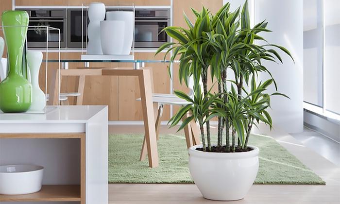Tronchetto tropicale con vaso groupon goods for Groupon arredo giardino