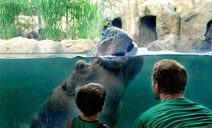 image for General Admission for One Child or Adult to Cincinnati Zoo and Botanical Garden (Up to 20% Off)