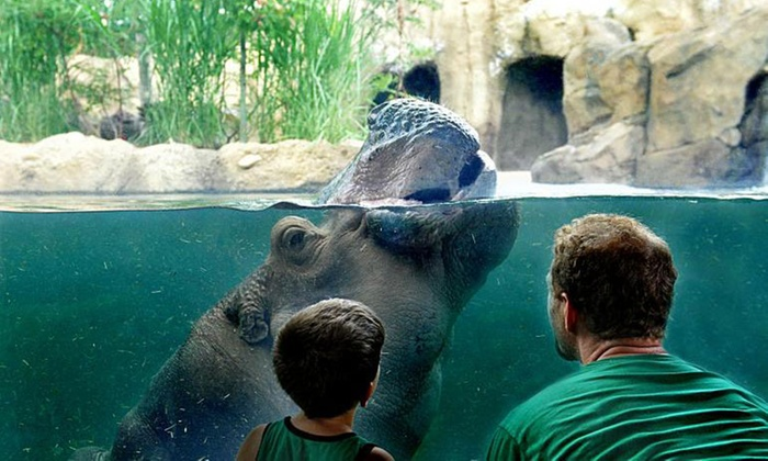 Admission For One Child Or Adult Cincinnati Zoo And Botanical