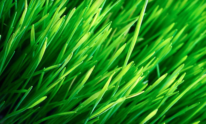 GreenImage Landscape & Design - Indianapolis: Lawn Aeration with or without Seeding from GreenImage Landscape & Design (Up to 57% Off)