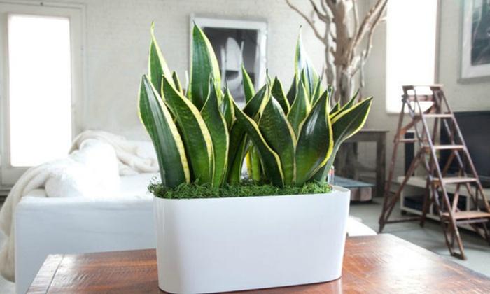 Piante Ufficio Ossigeno : Piante piante with piante piante sempreverdi che donano eleganza