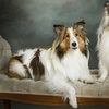 78% Off a Pet Photo-Shoot Package