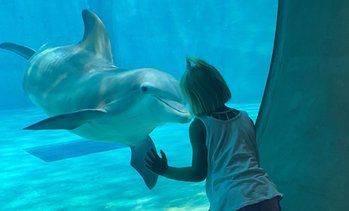 Single-Day Admission to Clearwater Marine Aquarium