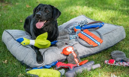 image for <strong>Pet</strong> Supplies at <strong>Pets</strong> N' Stuff (Up to 72% Off)