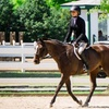Up to 52% Off Private Beginner Horseback Riding Lessons