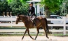 MTS Hunters LLC - Peachtree City-Tyrone: 5 or 10 One-Hour Private Beginner Horseback Riding Lessons at MTS Hunters LLC (Up to 60% Off)