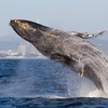 22% Off Whale-Watching Tour from Blue Ocean Whale Watch