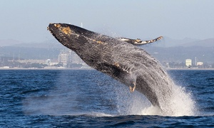 27% Off a Whale-Watching Tour from Blue Ocean Whale Watch at Blue Ocean Whale Watch, plus 6.0% Cash Back from Ebates.